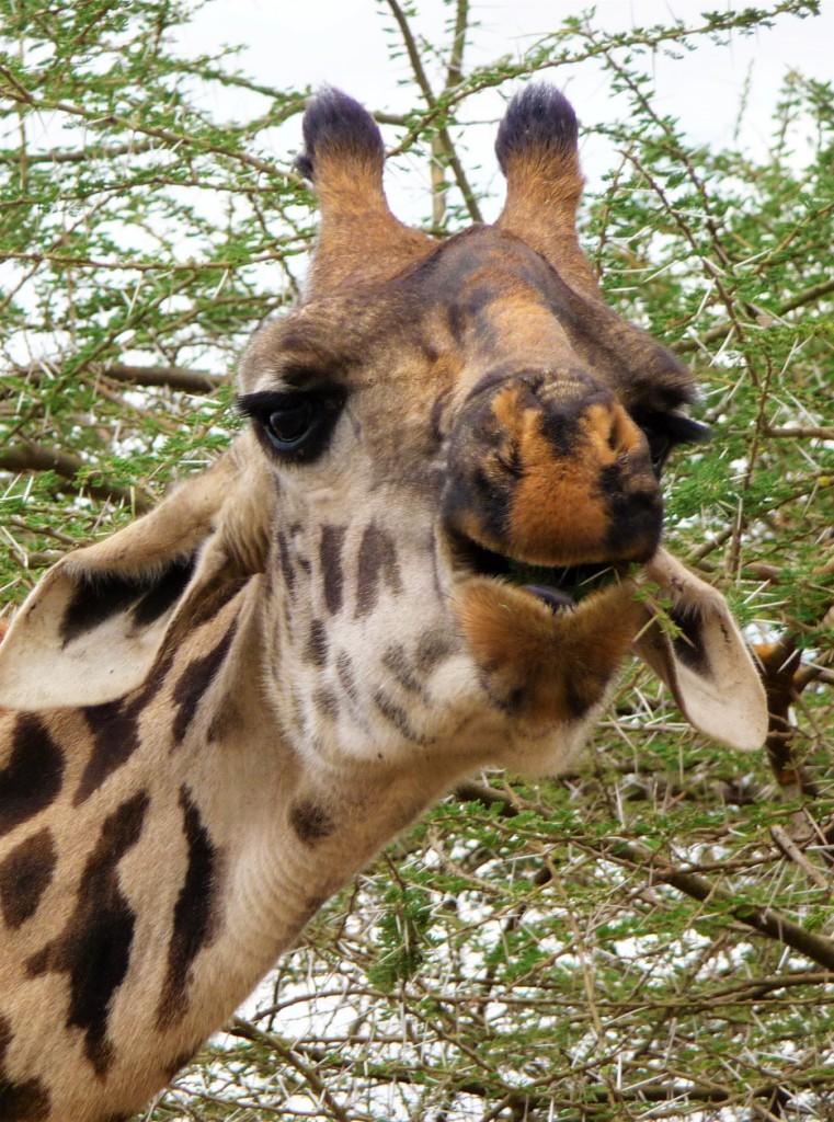 03 - Giraffe - Anna Maria Schuhberger